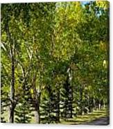 Tree Mix Canvas Print