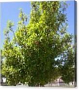 #tree #nature #andrography #nexuss Canvas Print