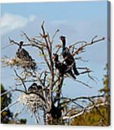 Tree Of Florida Cormorants Canvas Print