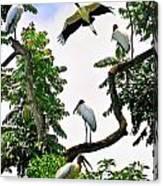 Tree Of Storks  Canvas Print