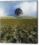 Tree On A Landscape, Giants Ring Canvas Print