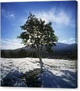 Tree On A Snow Covered Landscape Canvas Print
