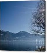 Tree On Lakefront Canvas Print