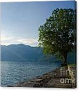 Tree On The Lake Front Canvas Print