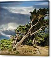 Tree Path Bridge Canvas Print
