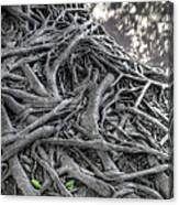 Tree Roots Canvas Print