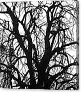 Tree Silhouette Canvas Print
