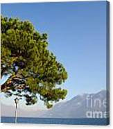 Tree Standing Close To A Lake Canvas Print