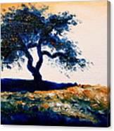 Tree Study 4 Canvas Print