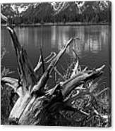 Tree Stump On The Shore Of Lewis Lake At Yellowstone Canvas Print