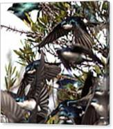 Tree Swallow - All Swallowed Up Canvas Print