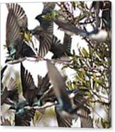 Tree Swallow Frenzy Canvas Print