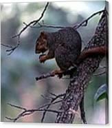Tree Top Nut Canvas Print