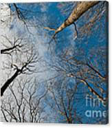 Tree Tops On The Wild Turkey Trail Canvas Print