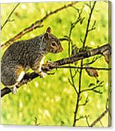 Tree Visitor Canvas Print