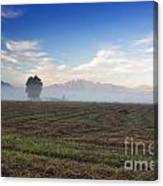Tree With Fog On The Field Canvas Print