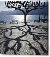 Tree With Shadow Canvas Print