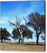 Treegedy Canvas Print