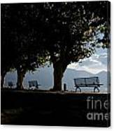 Trees And Benches Canvas Print