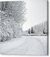 Trees And Dirt Path In Snowy Landscape Canvas Print