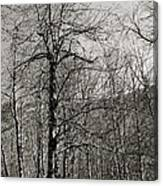 Trees And Hillside Canvas Print