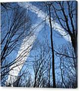 Trees And Trails Canvas Print