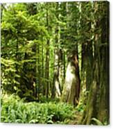 Trees At Cathedral Grove Canvas Print