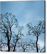 Trees. Autumn. Canvas Print