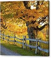 Trees In Autumn Colours And A Fence Canvas Print