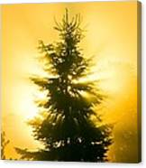 Trees In Fog At Sunrise Canvas Print