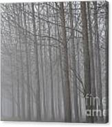 Trees In The Fog Canvas Print