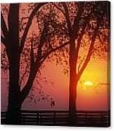 Trees In The Sunrise Canvas Print