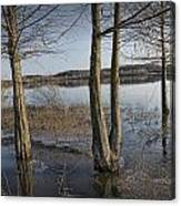 Trees On Flooded Riverbank No.1001 Canvas Print