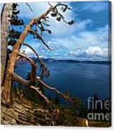 Trees On The Crater Canvas Print