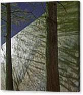 Trees Sky Shadow Canvas Print