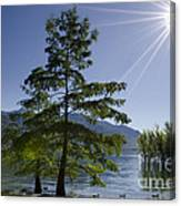 Trees With Sunbeam Canvas Print