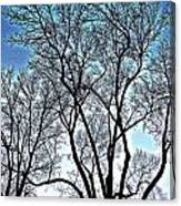 Treescapade Canvas Print