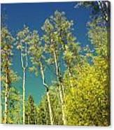 Treetop Color Canvas Print