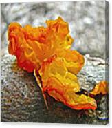 Tremella Mesenterica - Orange Brain Fungus Canvas Print