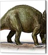 Triceratops Prorsus, A Prehistoric Era Canvas Print