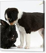 Tricolor Border Collie Pup With Black Canvas Print