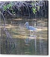 Tricolored Heron 1 Canvas Print