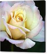 Trilogy Of A Rose- Day Two Canvas Print