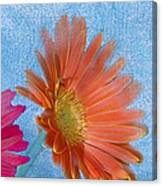 Triptych Gerbera Daisies-three Canvas Print