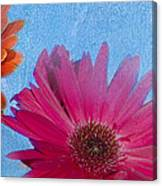 Triptych Gerbera Daisies-two Canvas Print