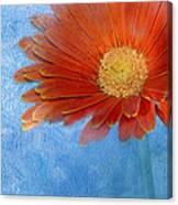 Triptych Gerbera Daisy-one Canvas Print