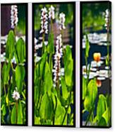 Triptych Of Water Hyacinth Canvas Print