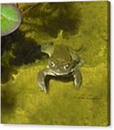 Troll's Toad Canvas Print