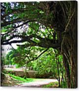 Tropical Banyan Path Canvas Print