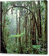 Tropical Cloud Forest Canvas Print